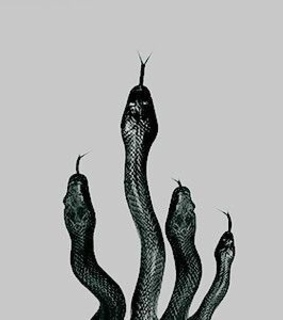 snakes, bad and toni