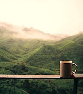 photography, green and tea