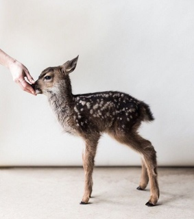 baby animals, deer and aesthetic blog