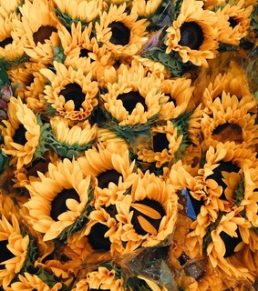 sunflowers, flowers and yellow