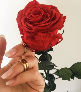 red rose, nails goals and claws inspo