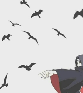 uchiha, ravens and itachi