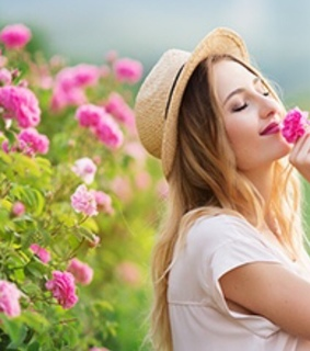 flowers, rose garden and beauty