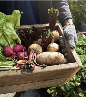 meal, fitness and potager