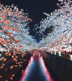 travelblogger, flowers and cherry blossoms