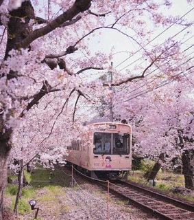 trees, cherryblossom and japanese