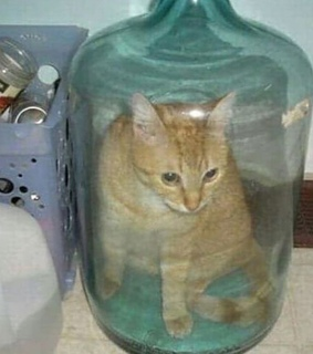 cursed, water and cat