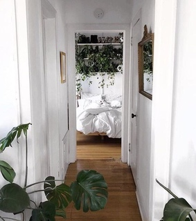 plants, inspiration and sweet home