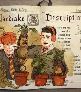 ron weasley, harry potter and mandrake