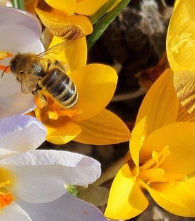 bumble bees, indie and bees