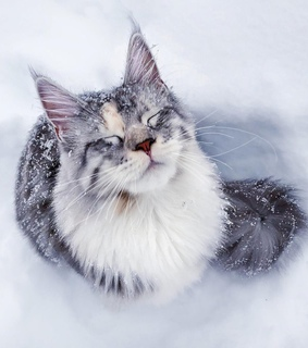 kitten, cute animals and snow