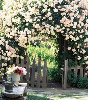 pink, garden and fence