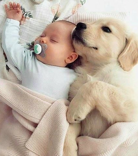 dog, cute and puppy