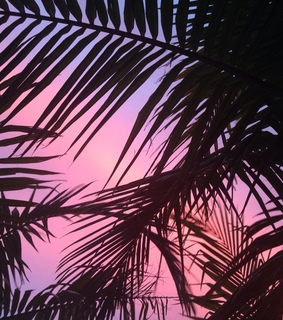 summer, exotic and pink