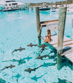 bahamas, swimming and sharks
