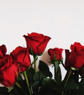 red roses, love and roses