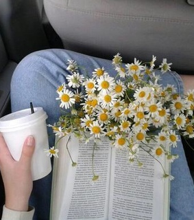 flowers, summer and indie