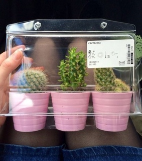 adorable, aesthetic and cactus