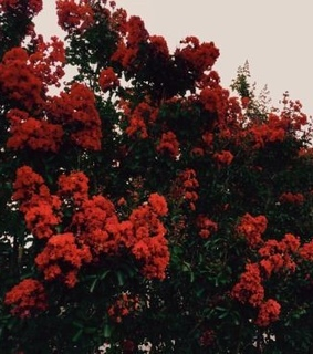 beautiful, nature and red