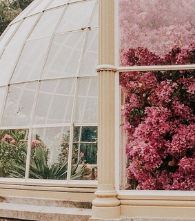 green house, wish and pink