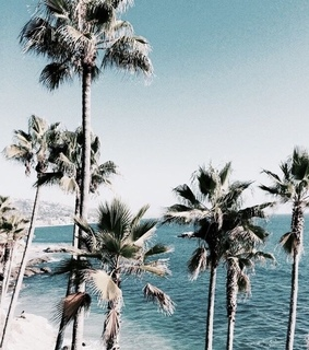 summer, palm tree and tumblr
