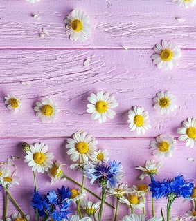 backgrounds, ecrã and flowers