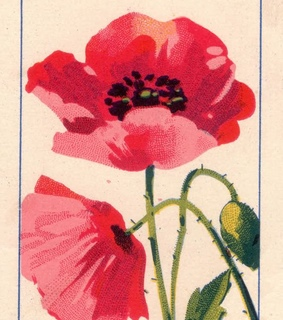 card, flower and red