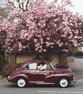 car, flowers and garden