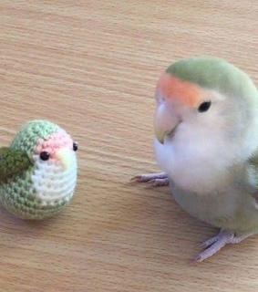 birb, bird and cute