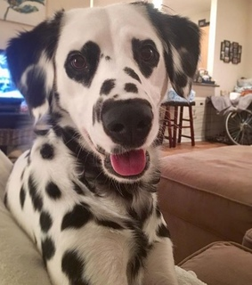 spot, eyes and dog