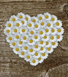 daisies, white and hearts
