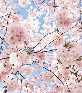aesthetic, beautiful and blossoms