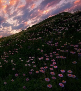cloudy, flower and landscape