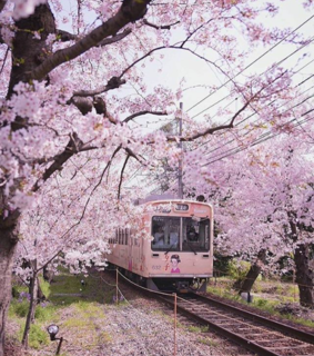 amazing, japan and pink