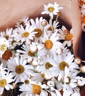 daisies, daisy and flowers