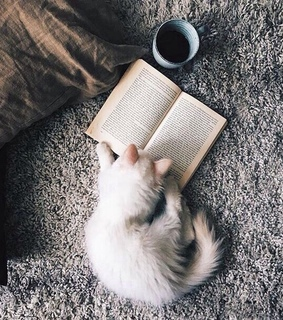 adorable, animals and book