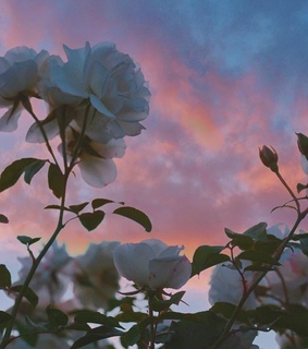 aesthetic, flowers and skies