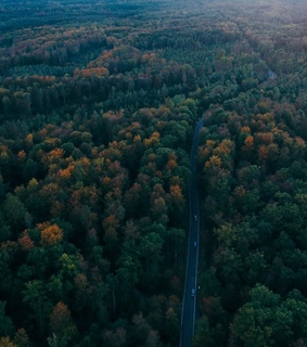 car, drive and forest