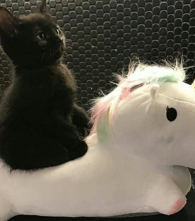 cute, cat and unicorn