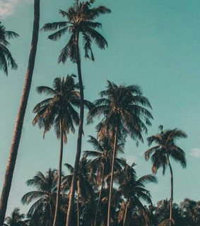 palm trees, sky and summer
