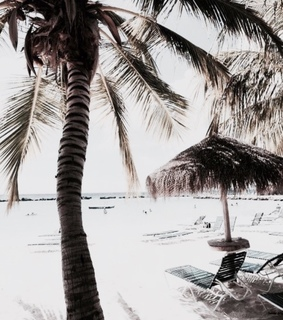 beach, palm trees and places