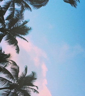 aesthetic, palmtrees and pinkclouds