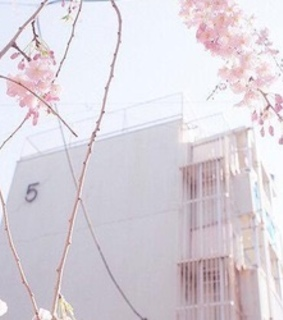 aesthetically, flower and pink aesthetic