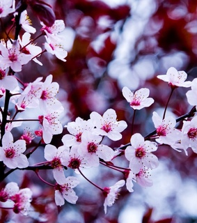 blossoms, life and love