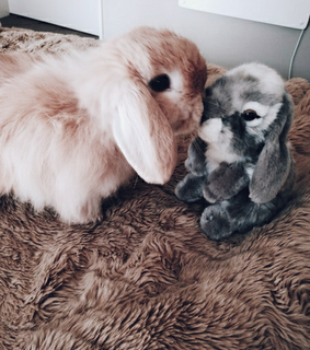 adorable, animal and bunny