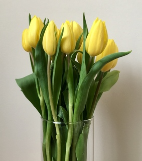 tulip, flowers and beautiful