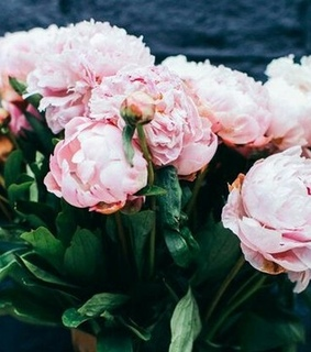 flowers, pink peony background and pink peony