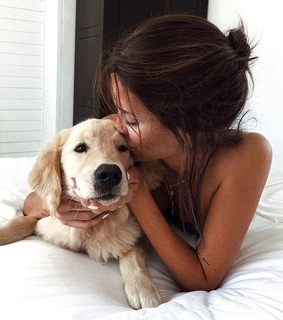 animals, cute and dog