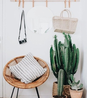 cacti, cactus and chair