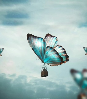 butterfly, love and fly away